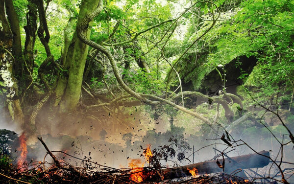 아마존 우림과 곶자왈